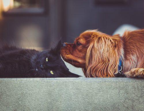 Pet Sitting vs Boarding